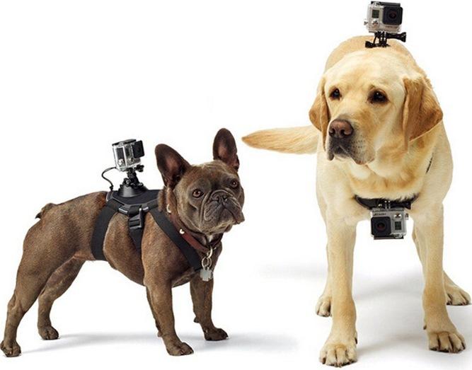 крепление экшн камеры для собаки или кошки